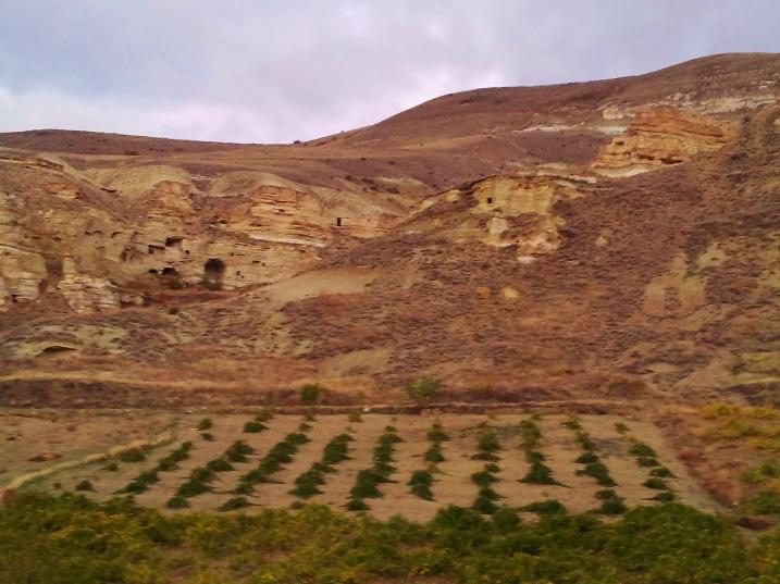 Cappadocian bush vines