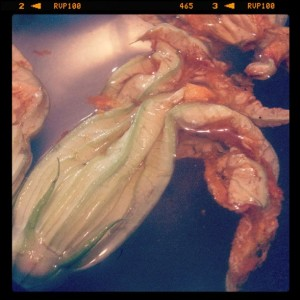 Farm fresh zucchini blossoms from the HV